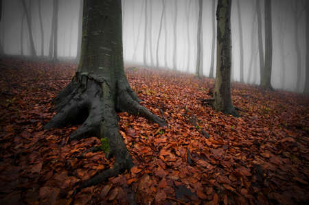 Autumn fallen leafs in a forest with fog Stock Photo - 16400278