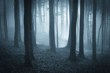 fantasy forest with fog and sunlight Stock Photo - 16400282