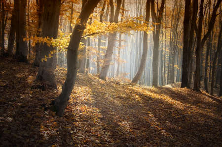 Autumn in a beautiful forest with fog Stock Photo - 16582028