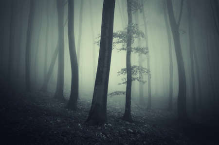 Spooky dark forest with fog Stock Photo - 16582025