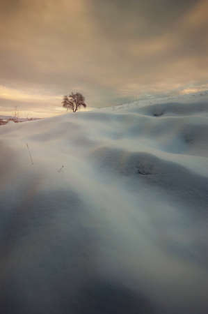 Winter landscape with snow and tree at sunset Stock Photo - 16582030