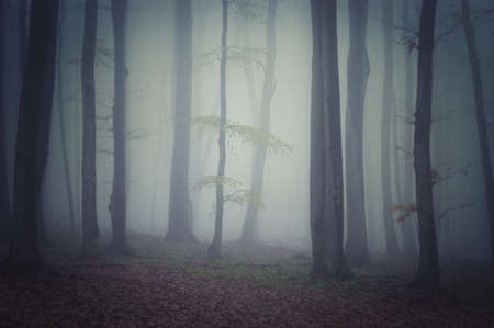 Dark spooky mysterious forest with fog photo