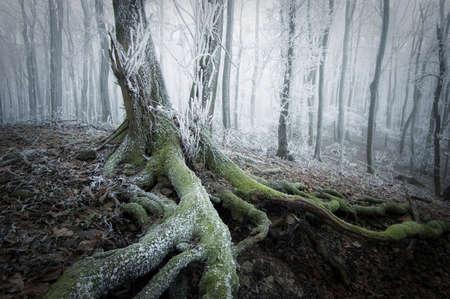 Bevroren boom in een bos in de winter Stockfoto