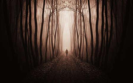fantasie bos met een man lopen trog mist