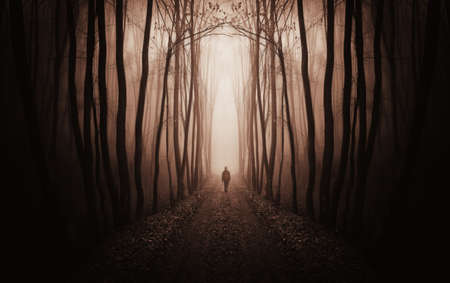 mystery woods: fantasy forest with a man walking trough fog