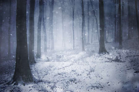 snow on the ground: winter in a dark forest with fog Stock Photo