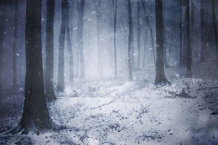 winter in een donker bos met mist Stockfoto