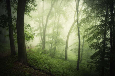 Green beautiful forest with fog in summer Stock Photo - 17204998