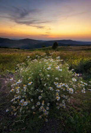 Wild flowers with sun setting in background Stock Photo - 17779420
