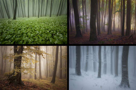 misty forest: Four seasons in a beautiful forest  winter, spring, summer, autumn