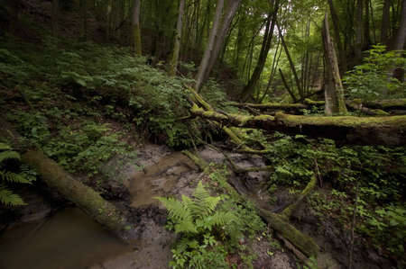 Jungle with trees moss and green fern and vegetation Stock Photo - 17779429