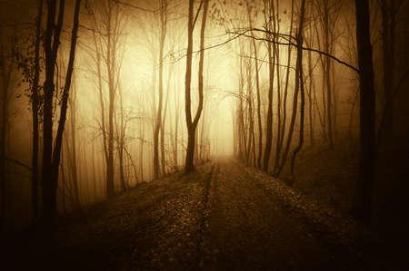 Dark forest in autumn with warm sunlight