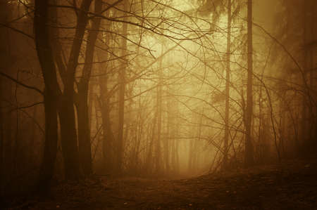 Sunrise in a deep dark forest with fog in autumn