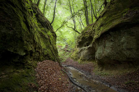 Valley with green moss and trees Stock Photo - 17779430