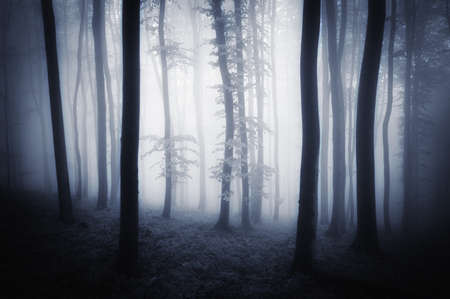 Dark woods with trees and fog