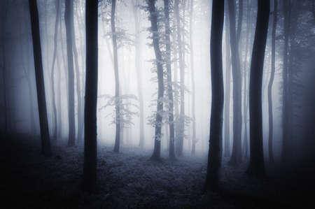 dark woods: Dark woods with trees and fog