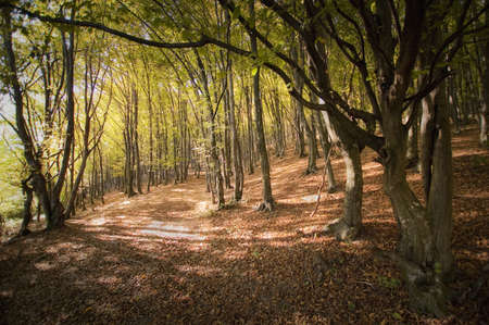 Warm light in a forest in autumn  Stock Photo - 17940464
