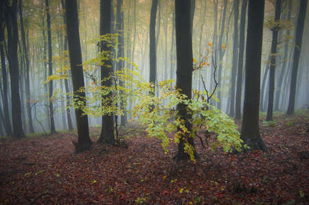 Autumn in a forest with cold fog in background Stock Photo - 17940462