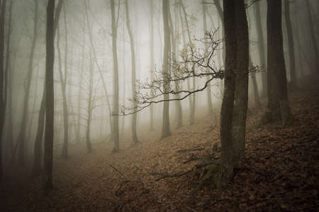 Dark forest with fog Stock Photo - 17940460