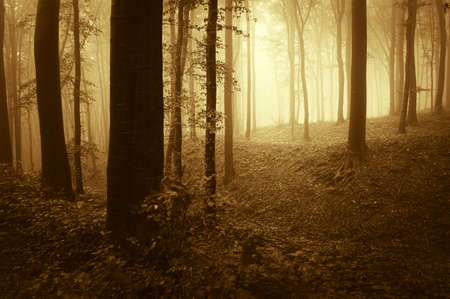 Warm light in a dark forest in autumn Stock Photo - 17940463