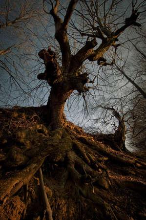 Spooky old mysteus tree Stock Photo - 18129393