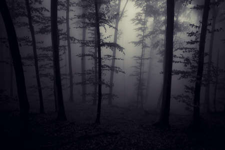 Dark forest with fog Stock Photo - 18129386