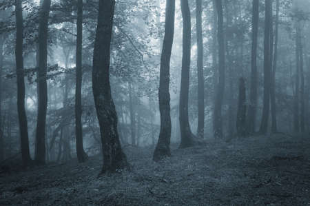 Blue fog in the forest Stock Photo - 18129398