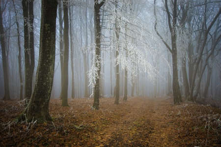 Frost on trees in a forest in autumn Stock Photo - 18708477