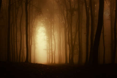 Light coming trough a dark spooky forest with fog in autumn Standard-Bild