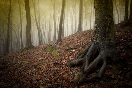 Autumn with fog in a forest Stock Photo - 18708476