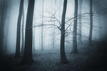 Trees in a dark spooky forest at dusk Stock Photo - 18708468
