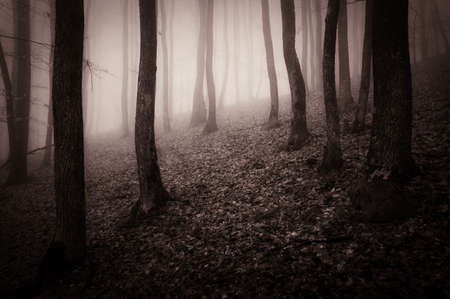 Dark forest with fog in late autumn Stock Photo - 18708467
