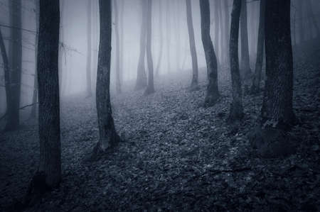 Deep dark forest with fog Stock Photo - 18708466