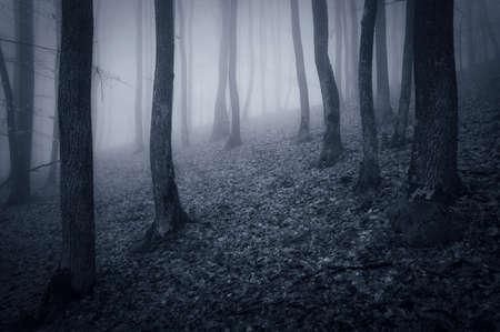 Deep dark forest with fog Stock Photo - 18708466