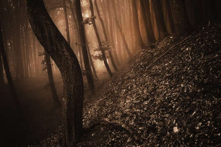 Dark spooky scene in a forest with fog Stock Photo - 18708474