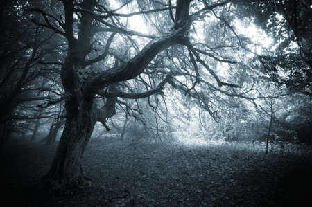 Donker bos met griezelige boom in het bos