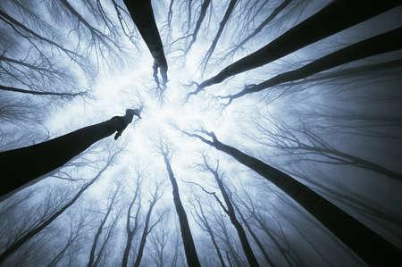 Samenvatting van uitzicht op het kijken bomen
