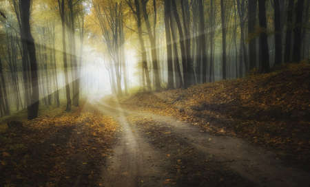 end of road: Sun rays at end of forest road in autumn