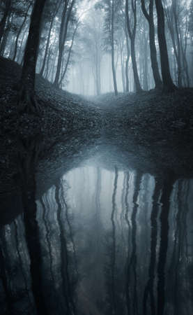 Lake in a forest with fog and trees reflecting in water