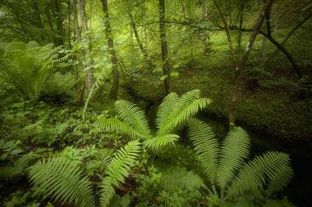 Green beautiful fern in a rainforest Stock Photo - 21357538