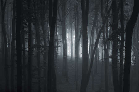 Deep dark woods with fog  photo