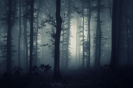 Dark woods with fog in autumn photo