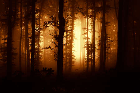 Sunset in a dark forest with fog Stock Photo