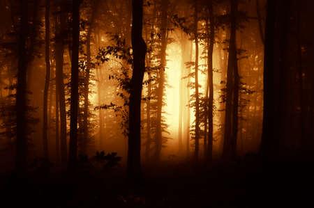 Zonsondergang in een donker bos met mist Stockfoto