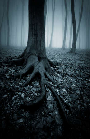 Tree with big roots in a dark forest with fog photo