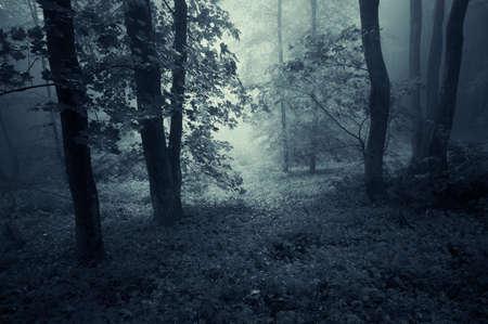 dark woods: Dark woods with fog in autumn