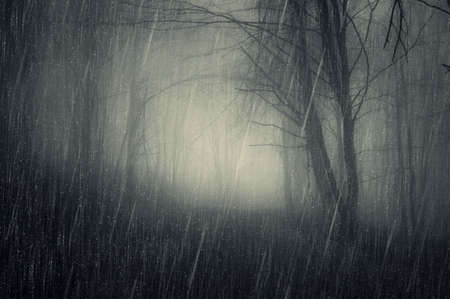 Rain in a dark forest with fog in autumn