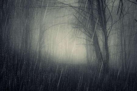 Rain in a dark forest with fog in autumn