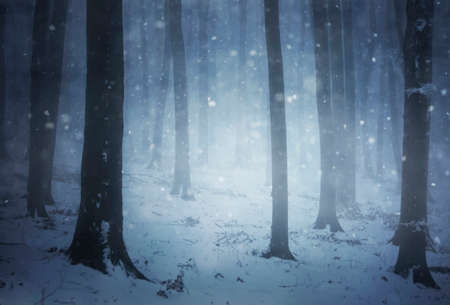 Snowstorm in a forest on a cold winter photo