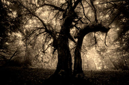 Dark spooky tree in a forest with fog Standard-Bild